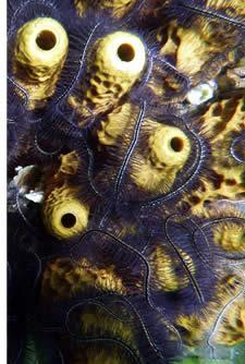 In Bocas del Toro finden Sie alle verschiedenen Arten von Korallen